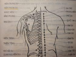 Cách chia đoạn cơ thể - Châm cứu
